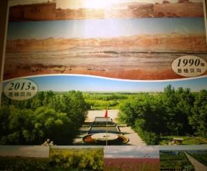 植林開始前(1990年)と23年後のビフォー・アフター。